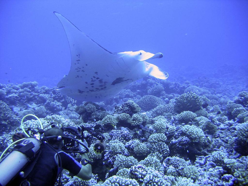 Diving Rangiroa - 207