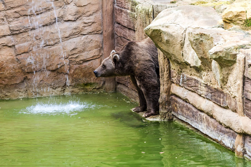 zoo-amneville