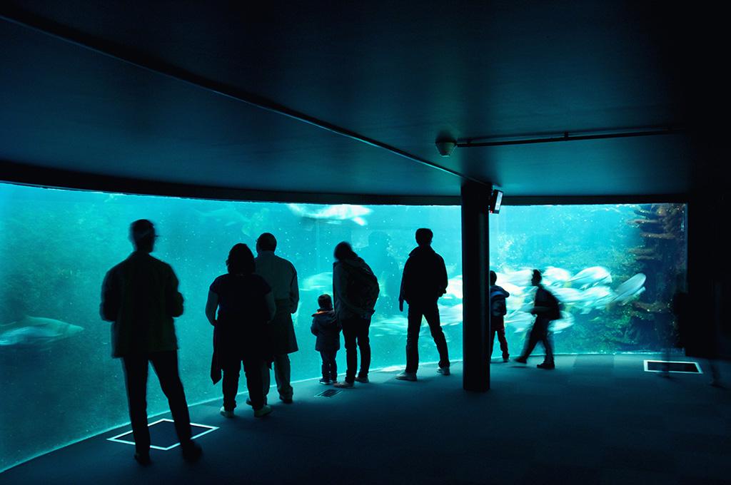 boulogne-sur-mer-nausicaa-aquarium-visiteurs